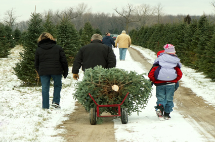 Christmas Tree Farm Insurance