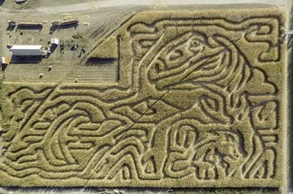 Corn Maze Insurance