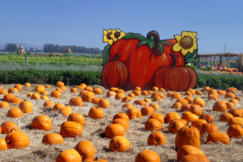 Pumpkin Farm Insurance